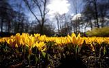 Zaterdag wordt het 10 graden en overwegend zonnig. De komende weken zien er volgens weerman Jannes Wiersema niet rooskleurig uit: 'Ik verwacht niet dat we in april de 20 graden aantikken'