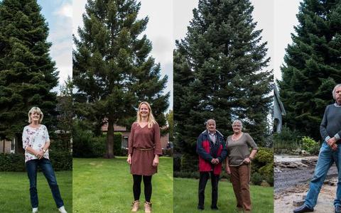 Zoektocht naar de Grote Markt kerstboom: 'Hij stond ooit als kerstboompje in huis'