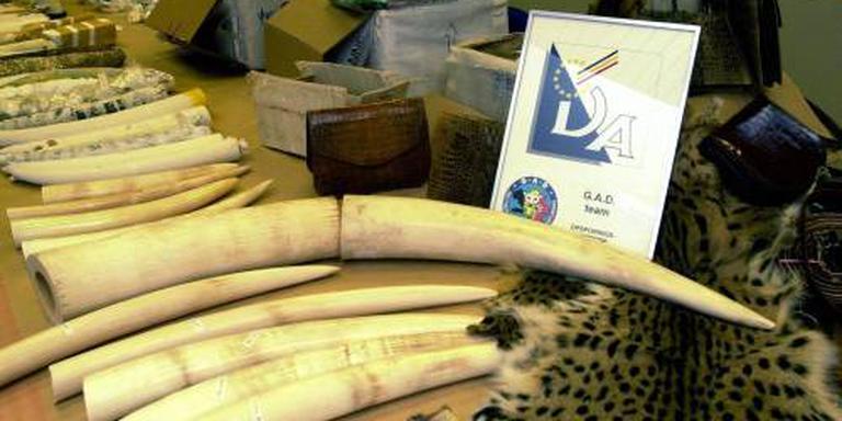 Veel verkocht ivoor is illegaal