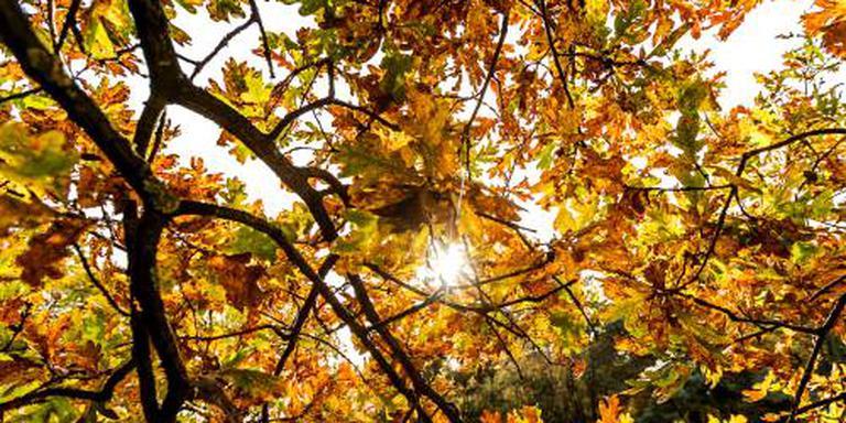 Een van de zonnigste herfsten ooit