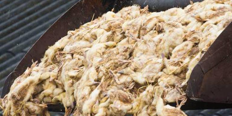 Milde vogelgriep op pluimveebedrijf Deurne
