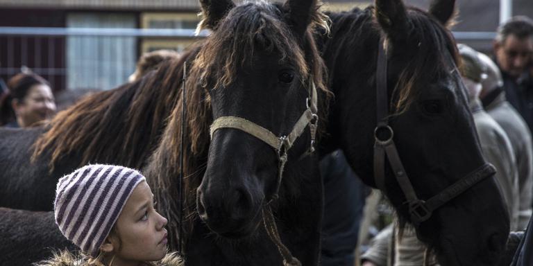 Paarden op de Zuidlaardermarkt