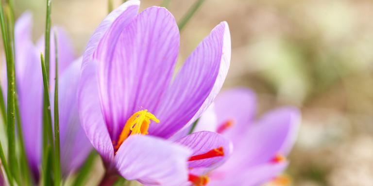 Lente in december: stuur uw foto