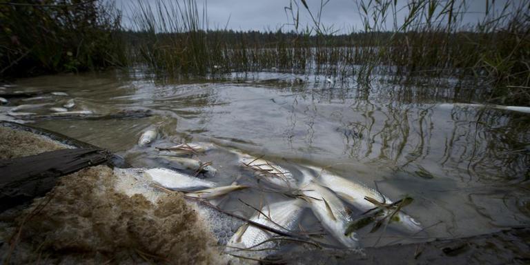 De Moere op archiefbeeld na massale vissterfte door slecht water. FOTO ARCHIEF DVHN