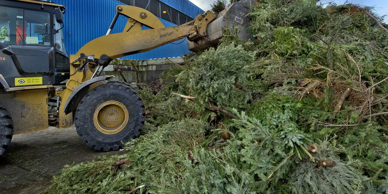 Westerveld weer vrij van kerstbomen