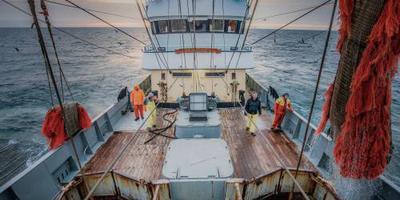 Geen EU-onderzoek naar fraude in pulsvisserij