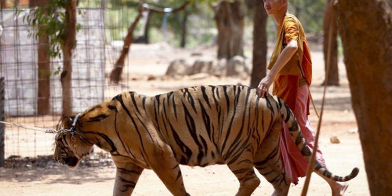 Thaise tijgertempel moet tijgers afstaan
