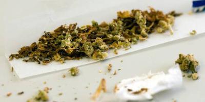 Groen licht voor export extra medicinale wiet