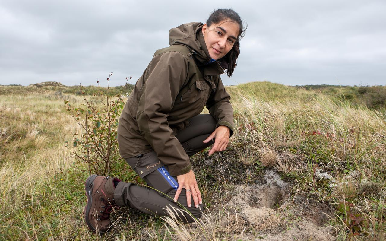 Cynthia Borras toont een graafplek van konijnen in de duinen van Schiermonnikoog.