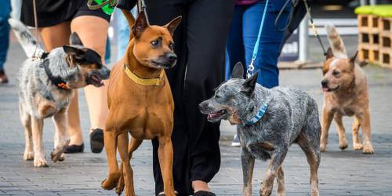Oververhitte honden in auto's bij hondenshow