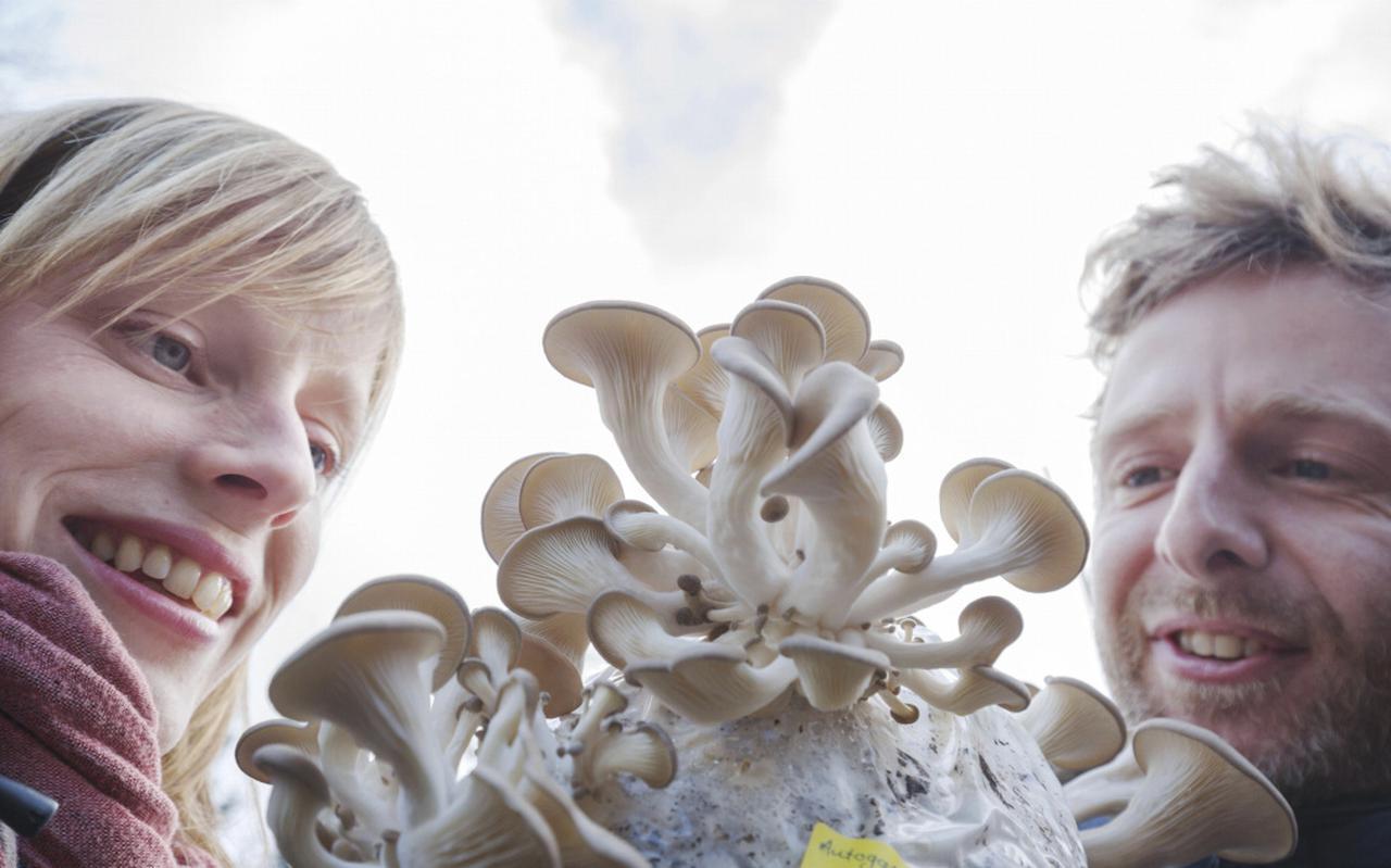 Lekkere paddenstoel groeit op koffieprut
