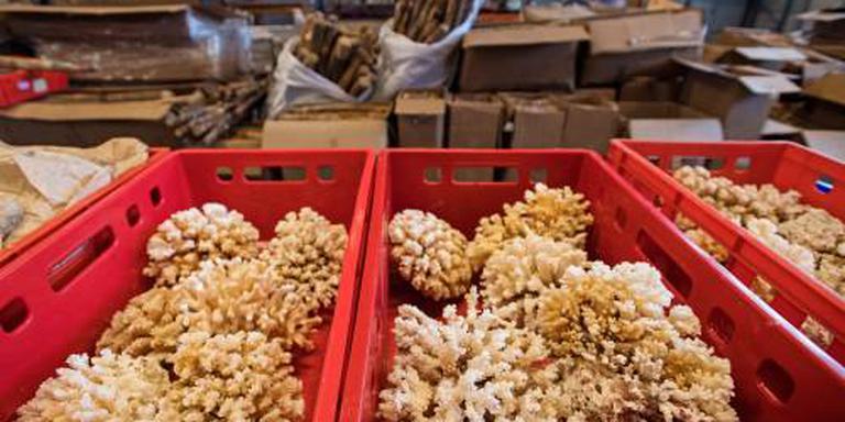 dood koraal douane