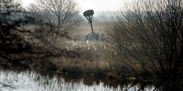 Het nest wordt overeind gezet. FOTO DVHN