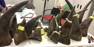 Douane Hong Kong onderschept neushoorn-hoorn