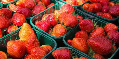 'Aardbei zes keer giftiger dan ander fruit'
