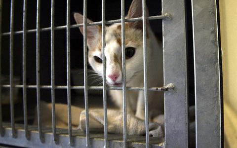 Massale toestroom verwilderde katten bij Drents Dierentehuis
