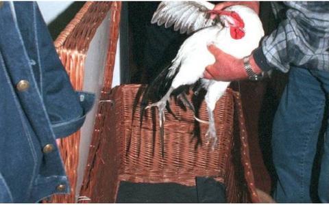 Dierenorganisaties bij rechter in geweer tegen Kallemooi op Schier: vijf vragen