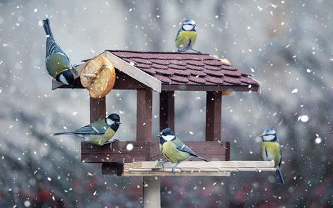 In Beeld: Voer voor de vogels