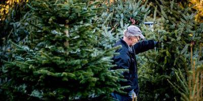 'Piek in kerstbomenverkoop'