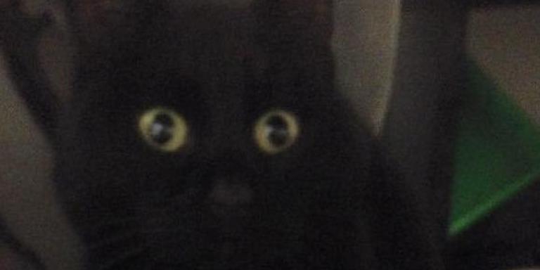 Zwarte kat als verstekeling bezorgbus