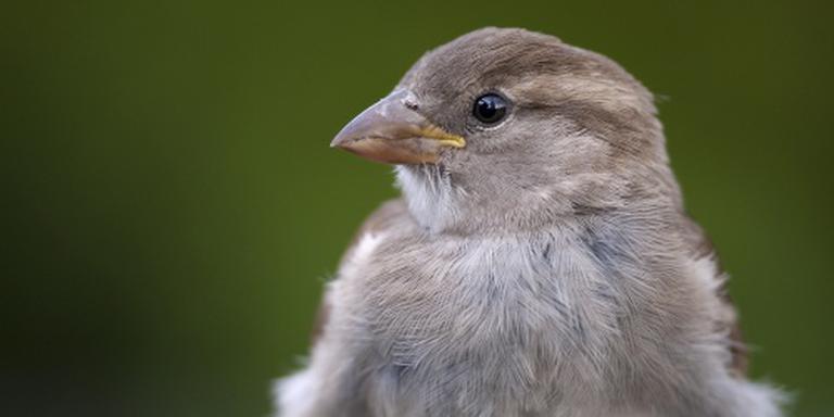 Vogels kijken in de vogelweek