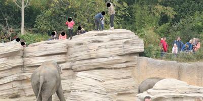 Bezoekers klimmen op de olifantenrotsen in de Emmer dierentuin. Foto: Jan de Zwarte