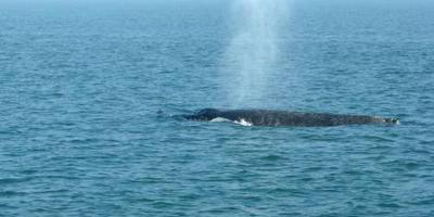 Walvissen gestresst tijdens de oorlog