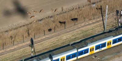 Minder vertraging door dieren op het spoor