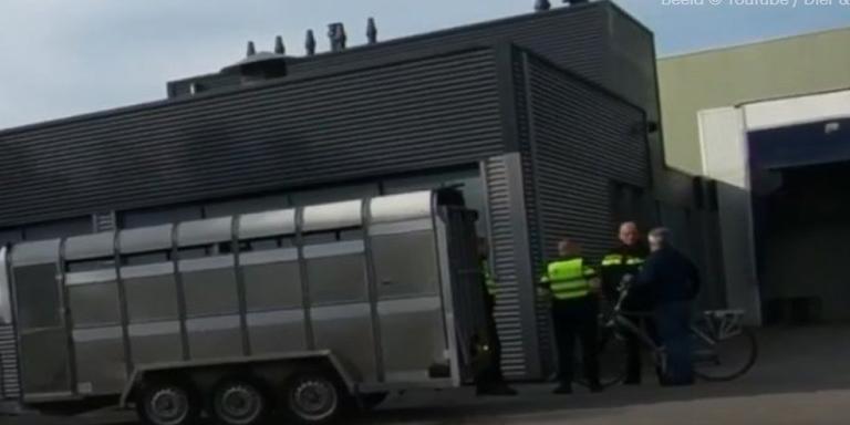 Het openbaar ministerie en de NVWA doen ene inval bij ene slachterij in Hoogeveen.