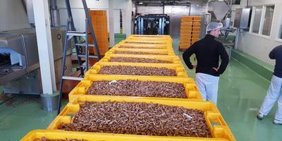 Een groot aanbod aan garnalen in Lauwersoog. Foto: DvhN