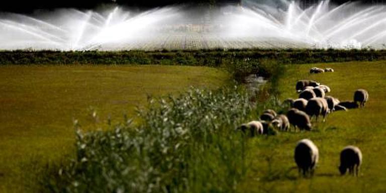 MEDIAWATCH: Boeren willen compensatie voor doodgebeten schapen