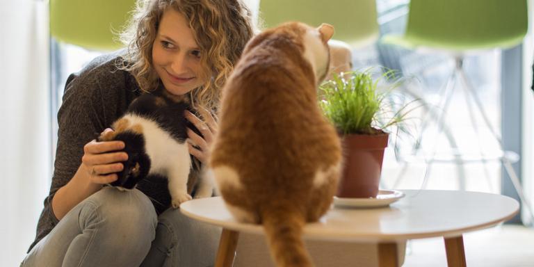 Image result for kattencafé groningen