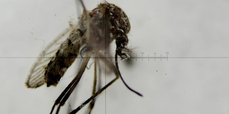 Inwoners Florida lopen zikavirus op