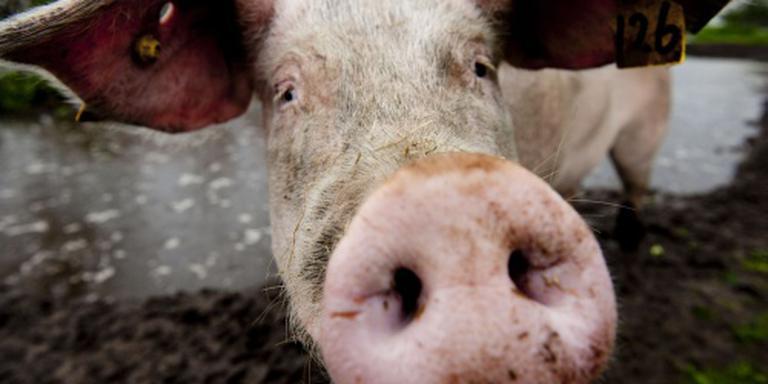 'Ook dierendag voor dieren in vee-industrie'