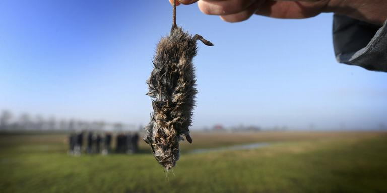 Nattere weide en kort gras tegen muizenplaag