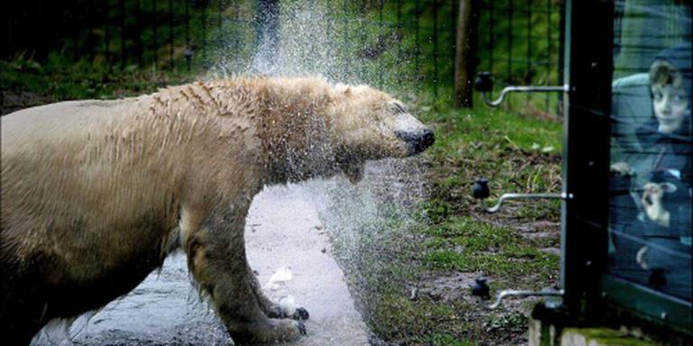 Oudste ijsbeer van Nederland overleden