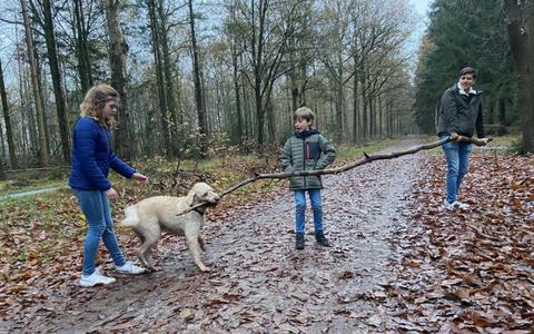 Wandelaars en fietsers klagen over loslopende honden in bossen bij Staphorst. Viervoeters moeten voortaan aan de lijn