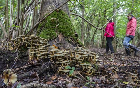 Op pad in Kropswolde met met expert Henk Pras: 'Dood hout komt tot leven met paddestoelen'