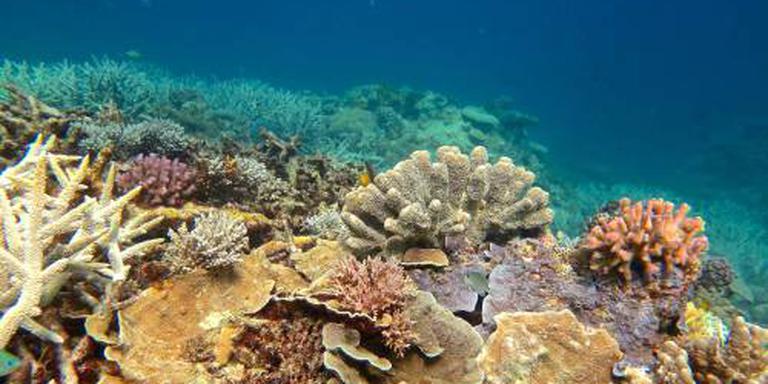 Warm zeewater 'kookt' Groot Barrièrerif kapot