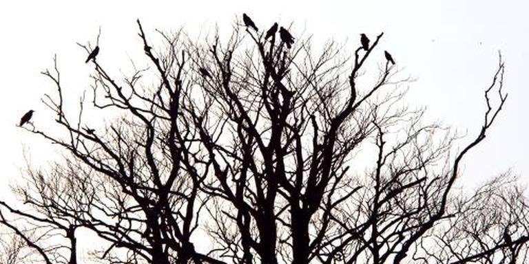 Stadsvogels missen struiken in de stad