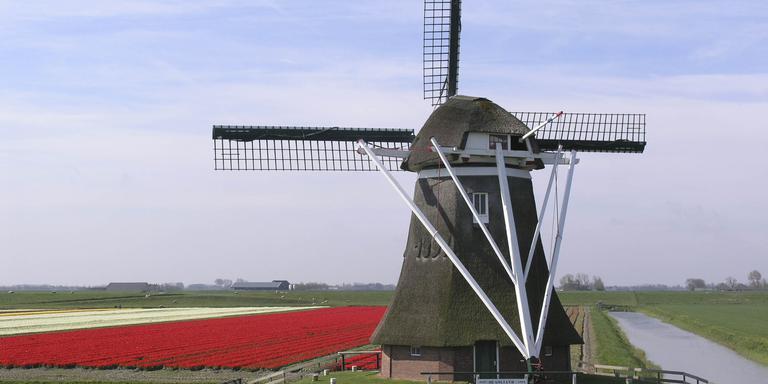 De molen Goliath bij Uithuizermeeden is een van overgebleven molens in de provincie Groningen. Foto; Archief