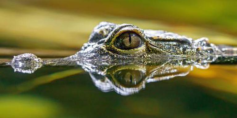 Australische vrouw gedood door krokodil
