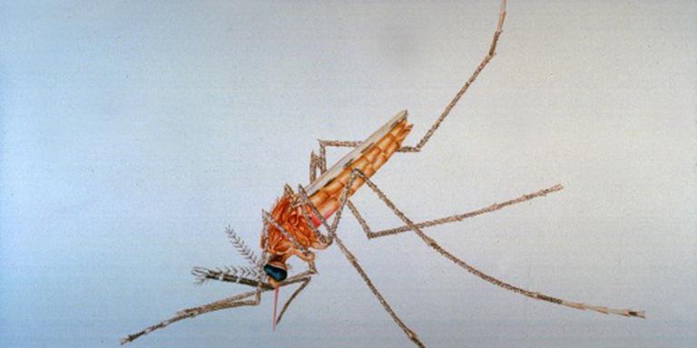 Malariamedicijnen teruggehaald uit apotheken