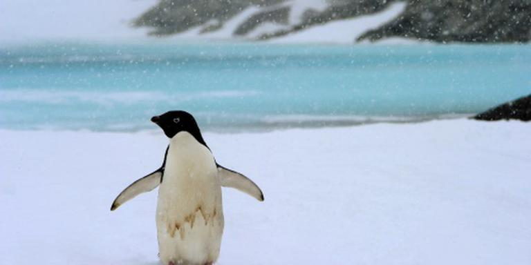 IJsberg bedreigt pinguïnkolonie op Antarctica