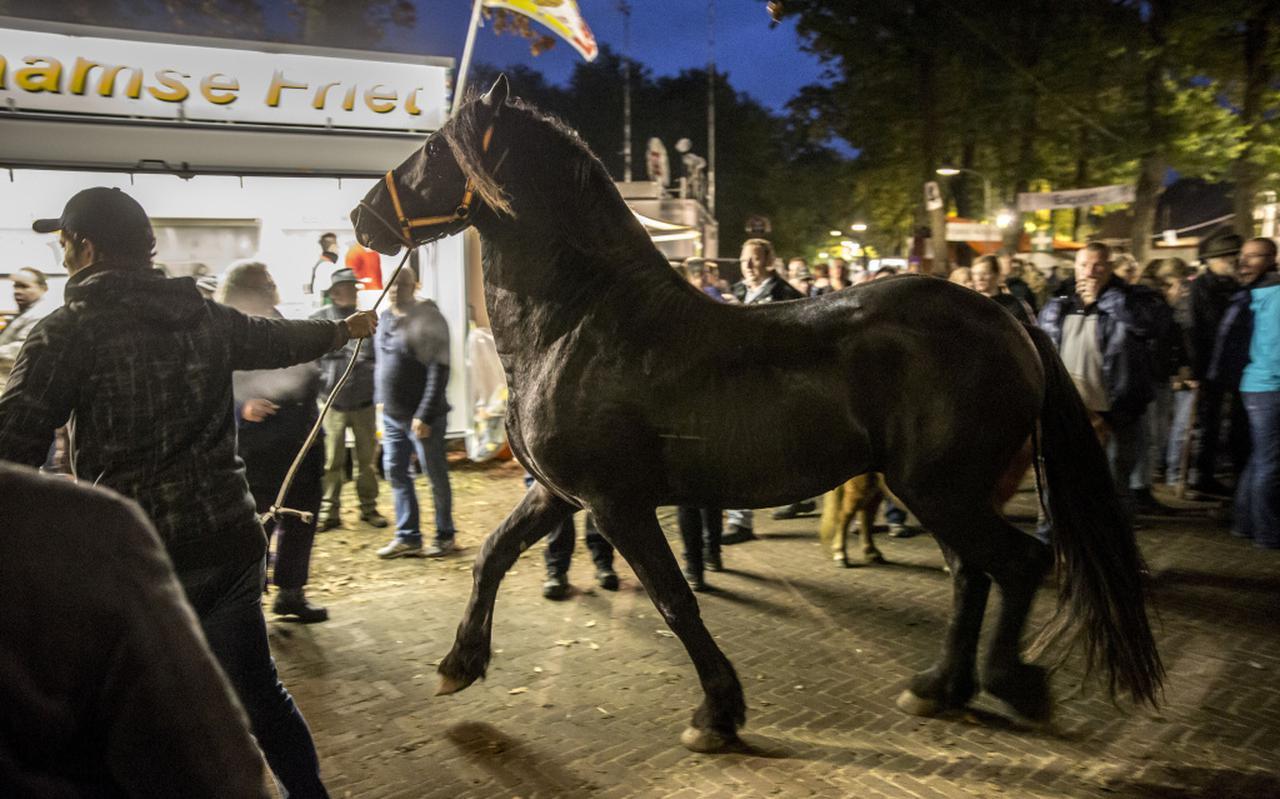 Paarden op de Zuidlaardermarkt. FOTO ARCHIEF PEPIJN VAN DEN BROEKE
