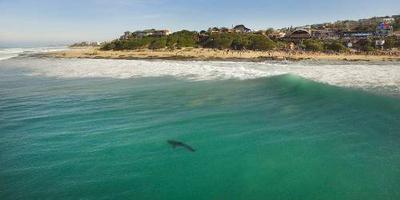 Opnieuw zwemmer zwaargewond door aanval haai