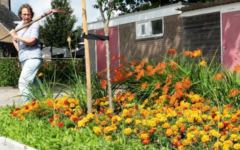 Het oranje bloemperk bij Museum De Duikelaar.