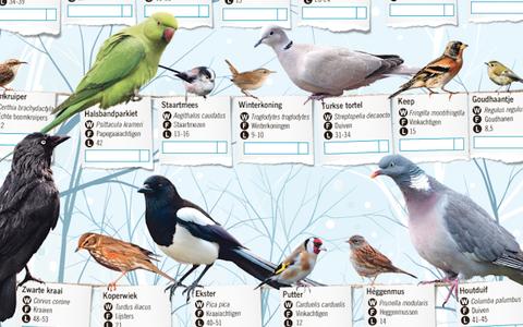 In Beeld: tuinvogels tellen