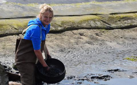 Honderden soorten microalgen in Waddenzee zijn de reddende engelen bij een mogelijk voedseltekort