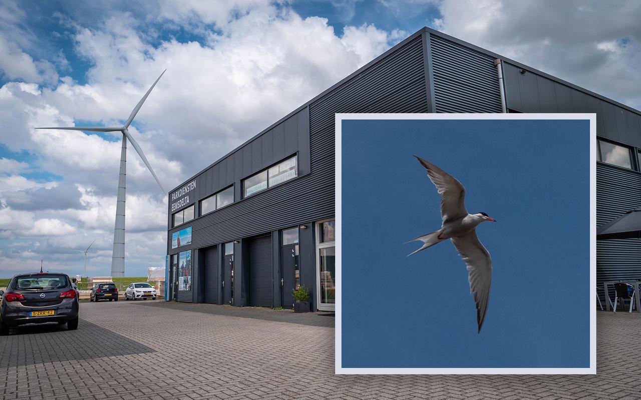 Een restaurant in de Eemshaven is het nieuwe thuis van visdieven. De vogels vallen klanten aan.